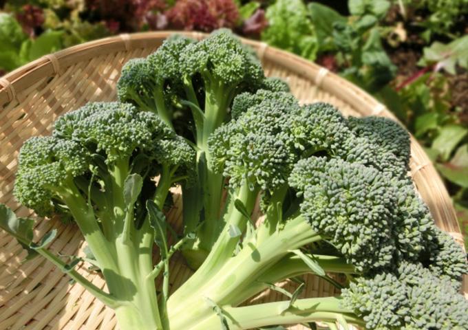 妊娠中の葉酸食材「ブロッコリー」
