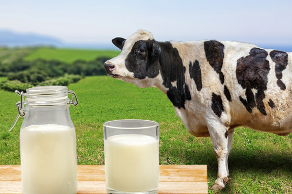 妊娠 牛乳